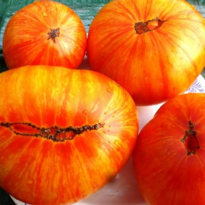 pomidory-beauty-king-korol-krasoty