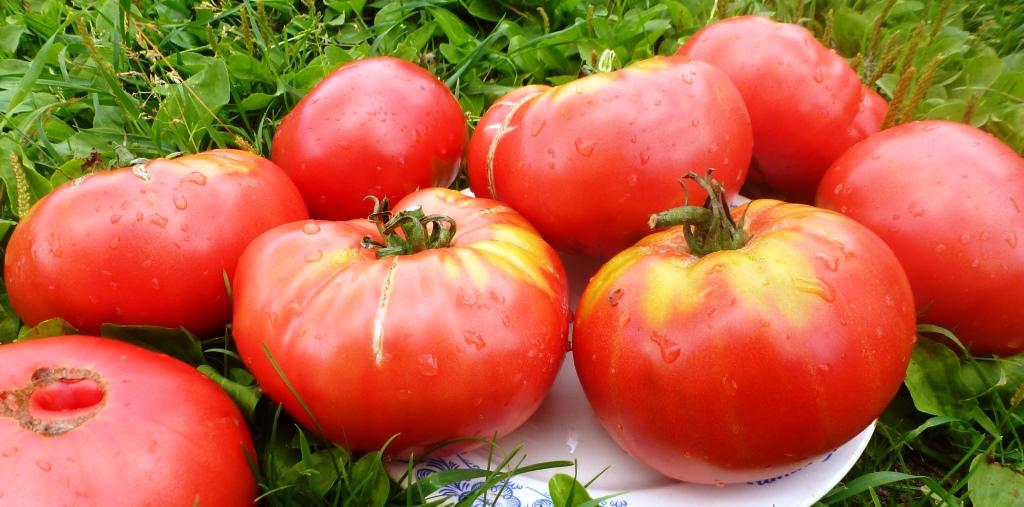 pomidory-sandul-moldovan-sandul-moldavskie