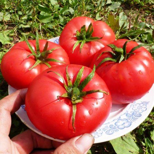 pomidory-vanskiy-rozovyy