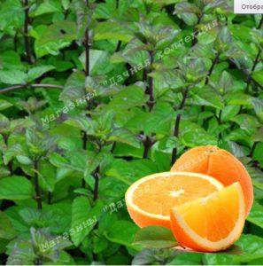 Апельсиновая мята