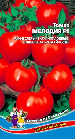 f1-tomat-melodiya