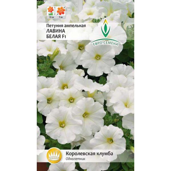 lavina-belaya-f1