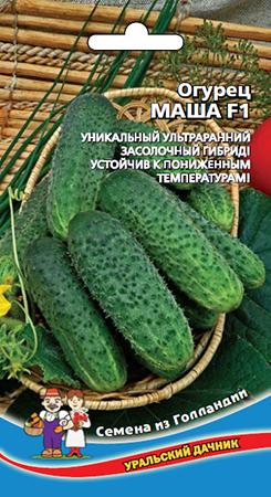 ogurec-masha-f1