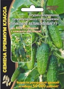 ogurec-puchkovoe-velikolepie-f1