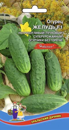 ogurec-zhelud-f1