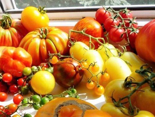 Коллекционные томаты