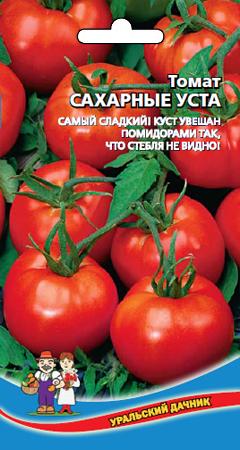 tomat-sakharnye-usta