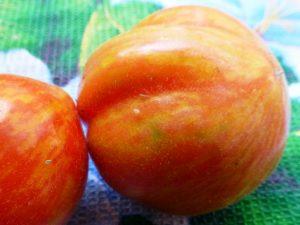 persik-2
