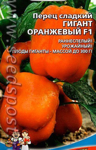 gigant-oranzh