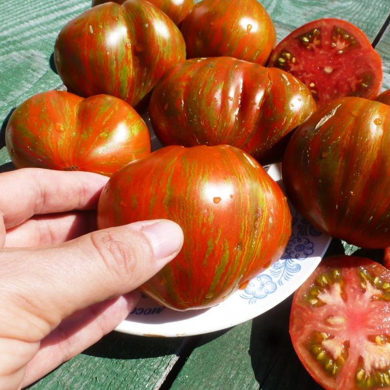 tomat-berkeley-tiy-dye-heart-serdce-v-stile-tay-day
