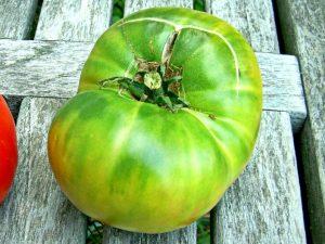 Томат Green Giant - Зелёный Гигант
