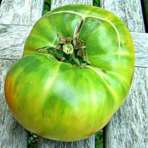 tomat-green-giant-zelyonyy-gigant1