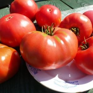 tomat-yusupovskiy-2