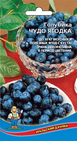 golubika-vysokoroslaya-chudo-yagodka