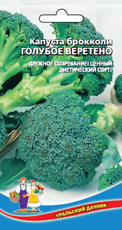 kapusta-brokkoli-goluboe-vereteno