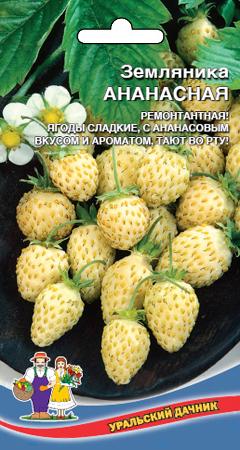 zemlyanika-ananasnaya