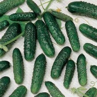 Профессиональные семена огурцов