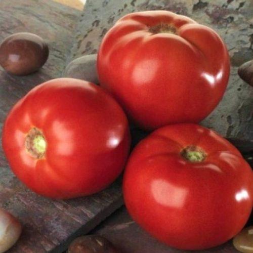 Профессиональные томаты