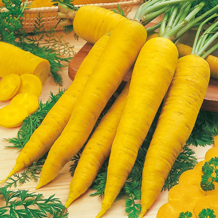 Морковь желтая Lobbericher