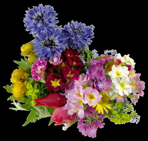 Цветочные и декоративные культуры