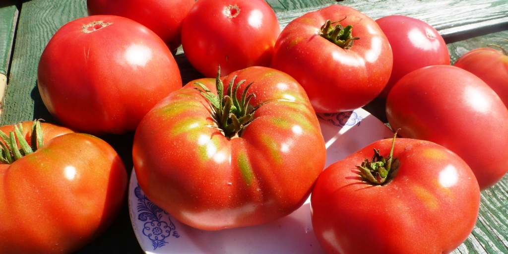 pomidory-yusupovskie