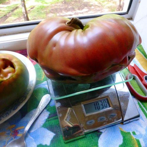 pomidory-brads-black-heart-chyornoe-serdce-breda2