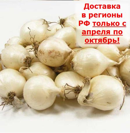 shalot-belyy