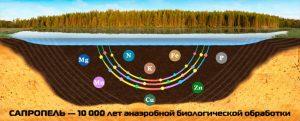 Сапропель-единственное удобрение для коренного улучшения почвы!