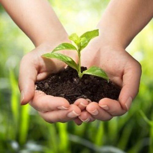 Натуральные органические удобрения