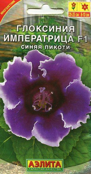 gloksiniya-imperatrica-sinyaya-pikoti-5sh