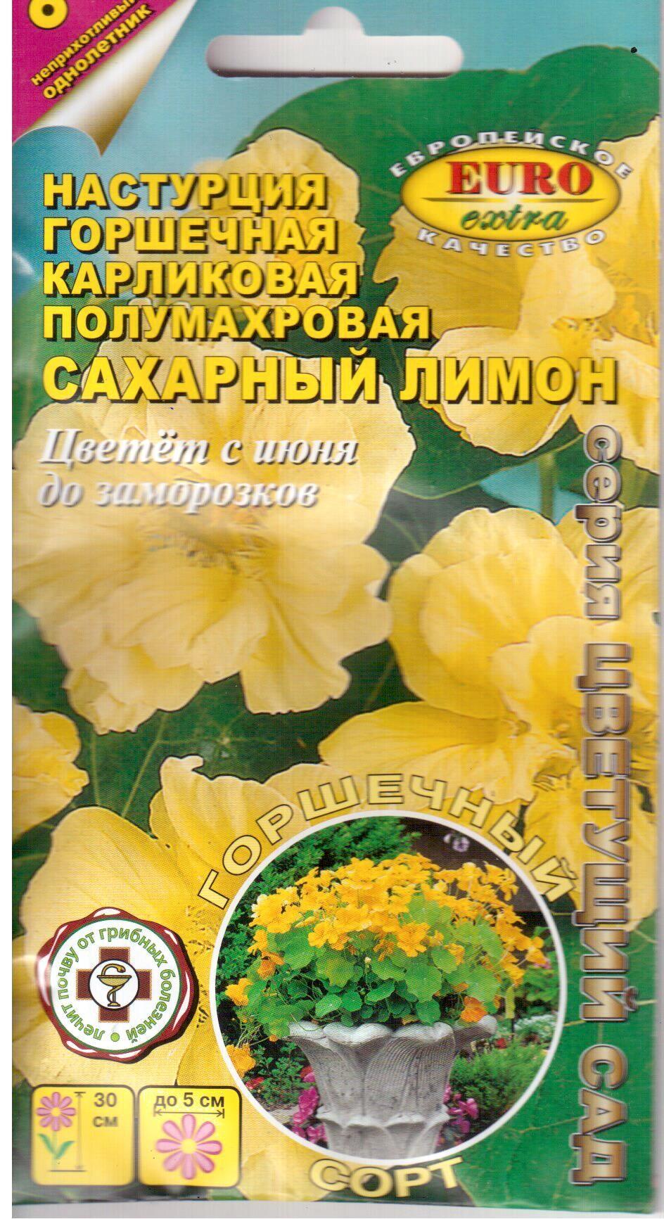 nasturciya-sakharnyy-limon-gorshechnaya-k