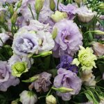 nature___flowers_beautiful_eustoma_irish_rose_at_their_summer_cottage_067307_2