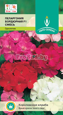 pelargoniya-bordyurnaya-smes