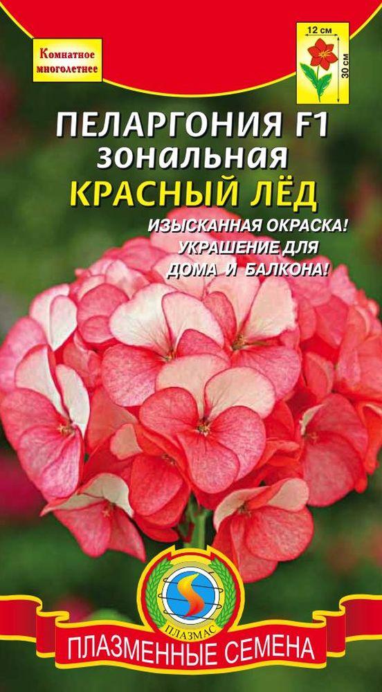 pelargoniya-f1-krasnyy-lyod