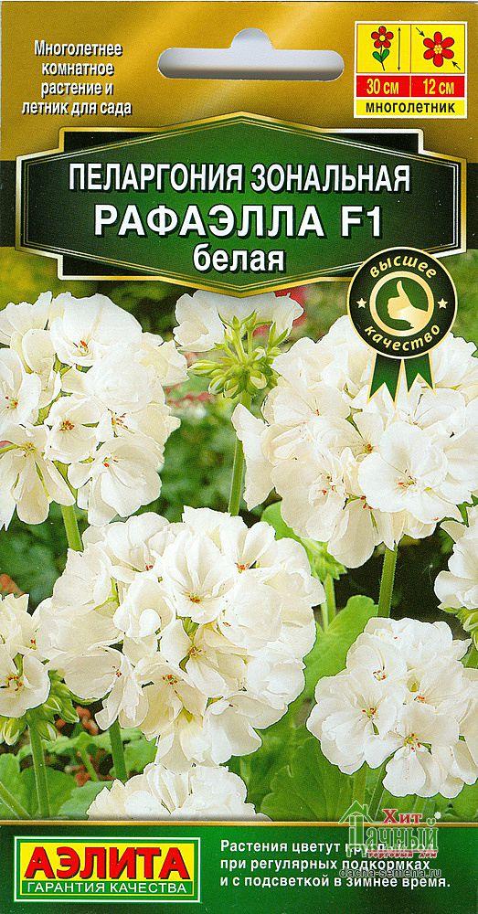 pelargoniya-rafayella-f1-belaya-ayelita