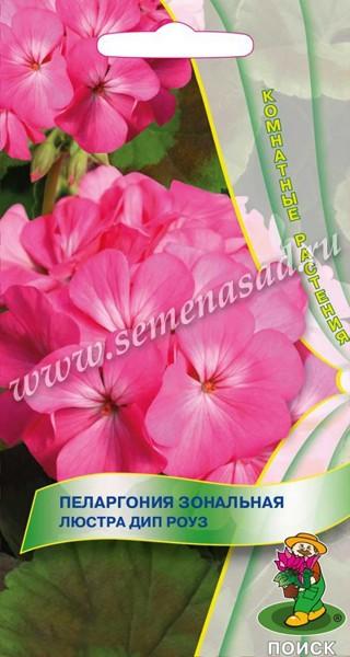 pelargoniya-zonalnaya-lyustra-dip-rouz