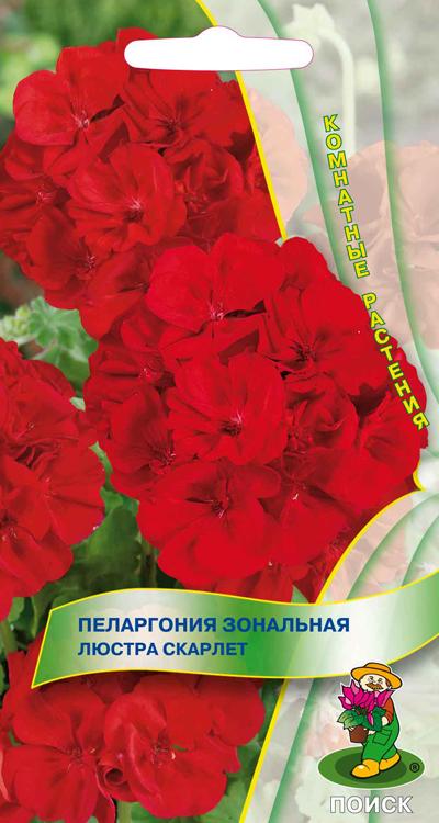 pelargoniya-zonalnaya-lyustra-skarlet