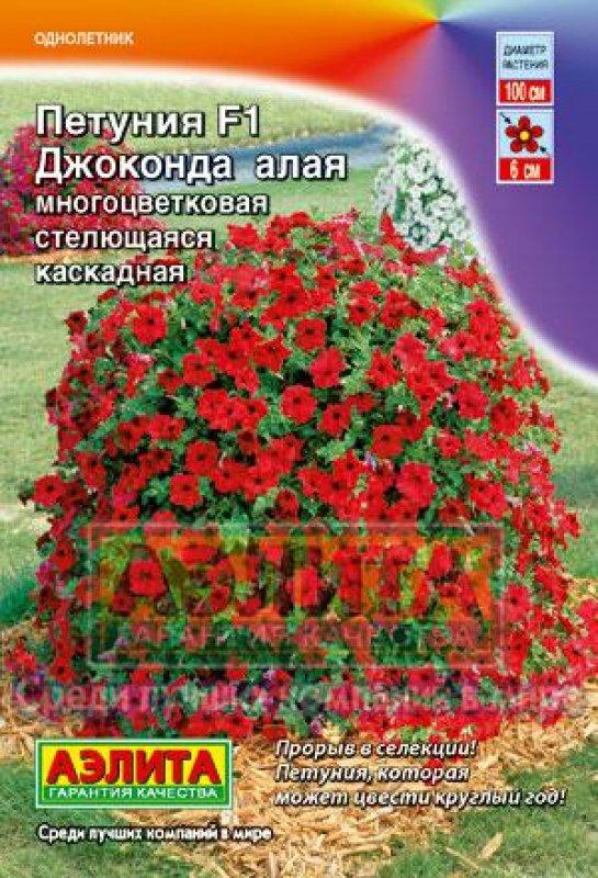 petuniya-dzhokonda-alaya
