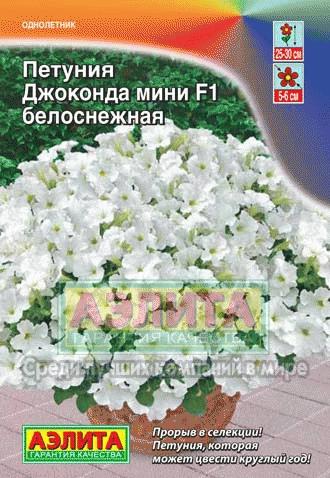 petuniya-dzhokonda-mini-belosnezhnaya