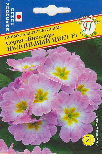 primula-bikolor-yablonevyy-cvet-yaponi