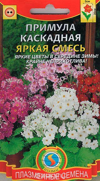 primula-yarkaya-smes-18shtplazm