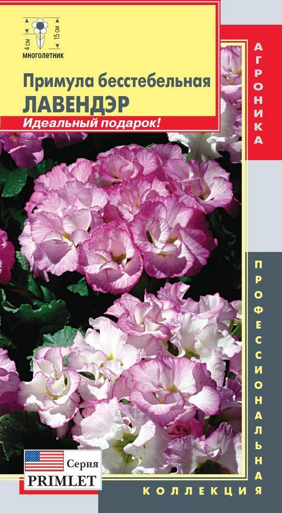 primula-besstebelnaya-lavendyer-5sht-ag