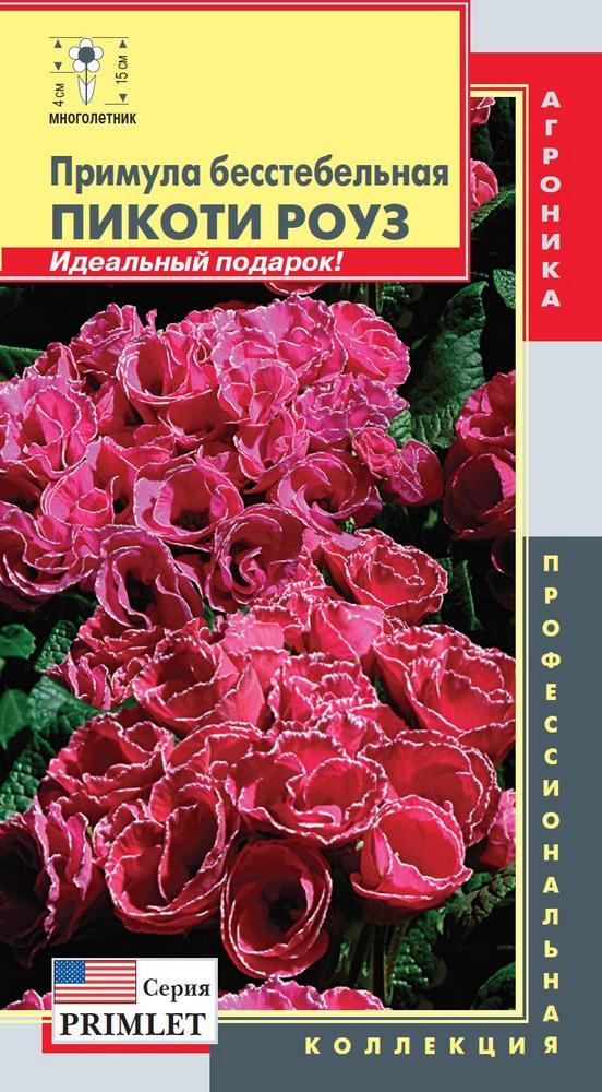 primula-besstebelnaya-pikoti-rouz-5sht