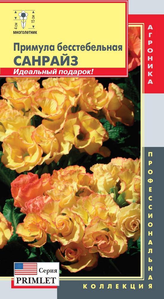 primula-besstebelnaya-sanrayz-5shtagr