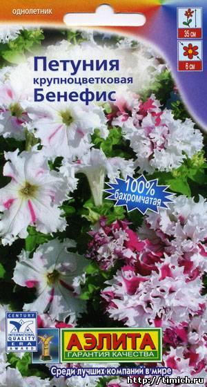 petuniya-benefis-krupnocvetkovaya-bakh