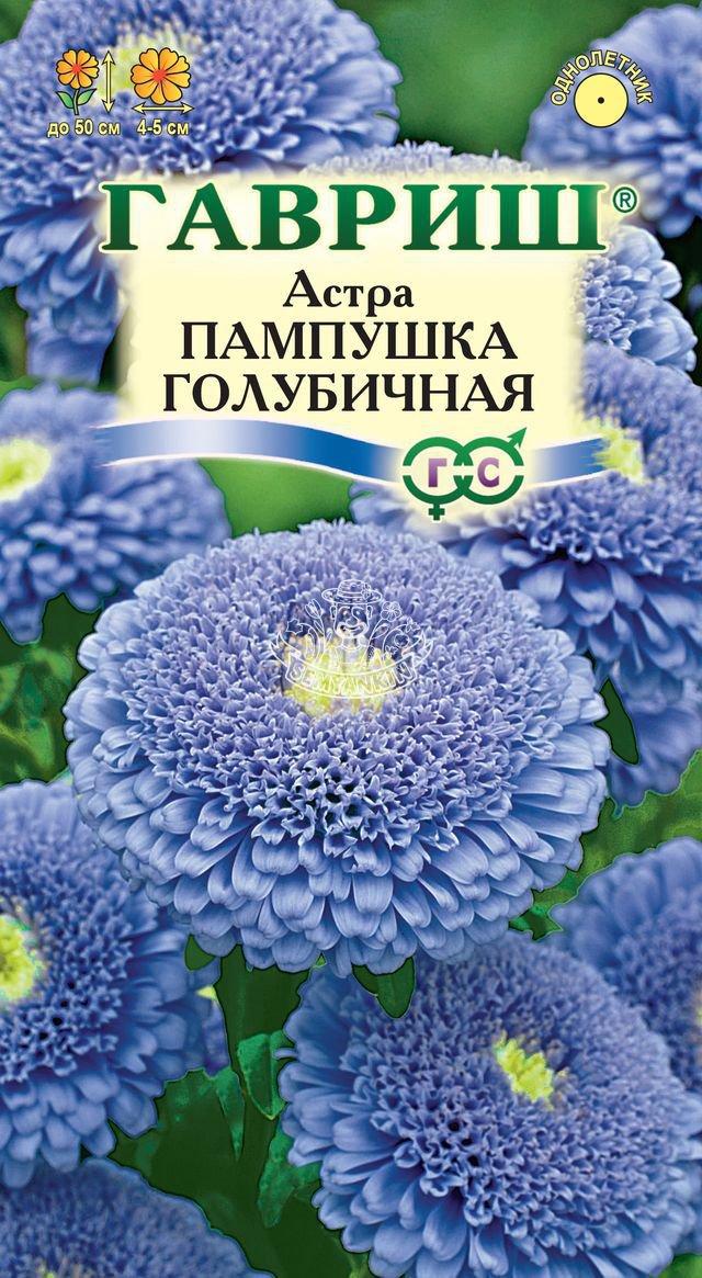 astra-pampushka-golubichnaya-gavrish