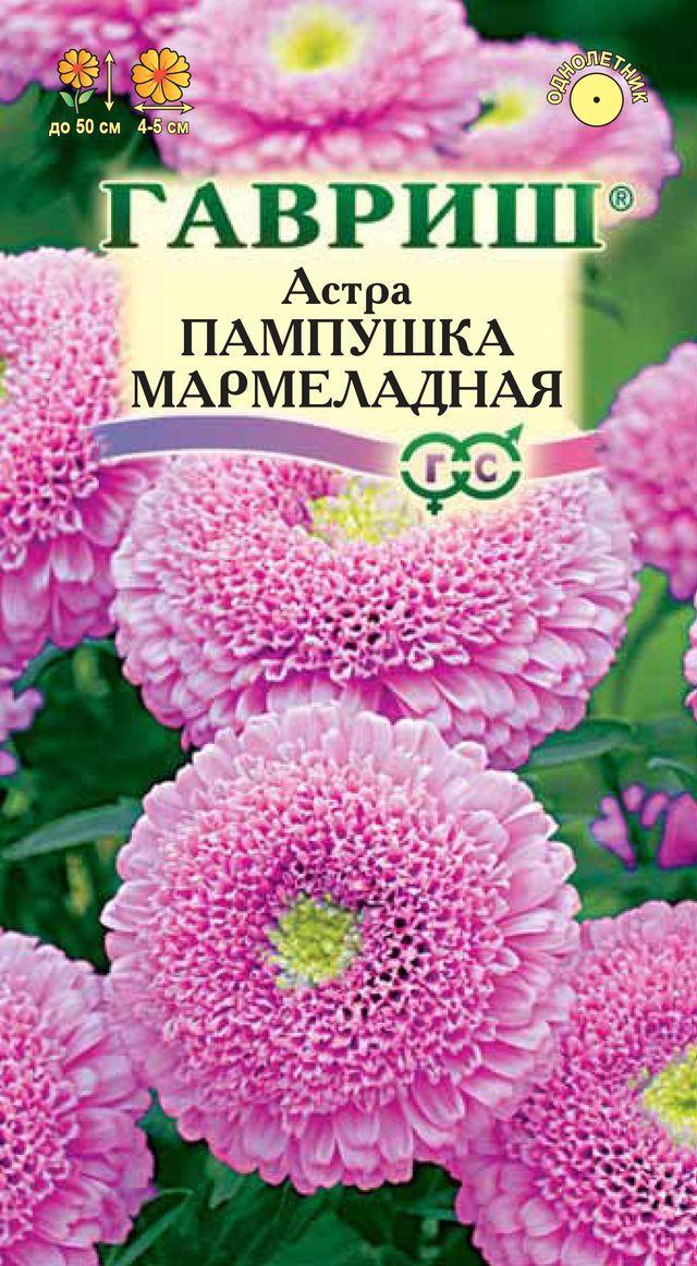 astra-pampushka-marmeladnaya-gavrish