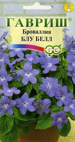 brovalliya-blu-bell-3-sht-gavrish