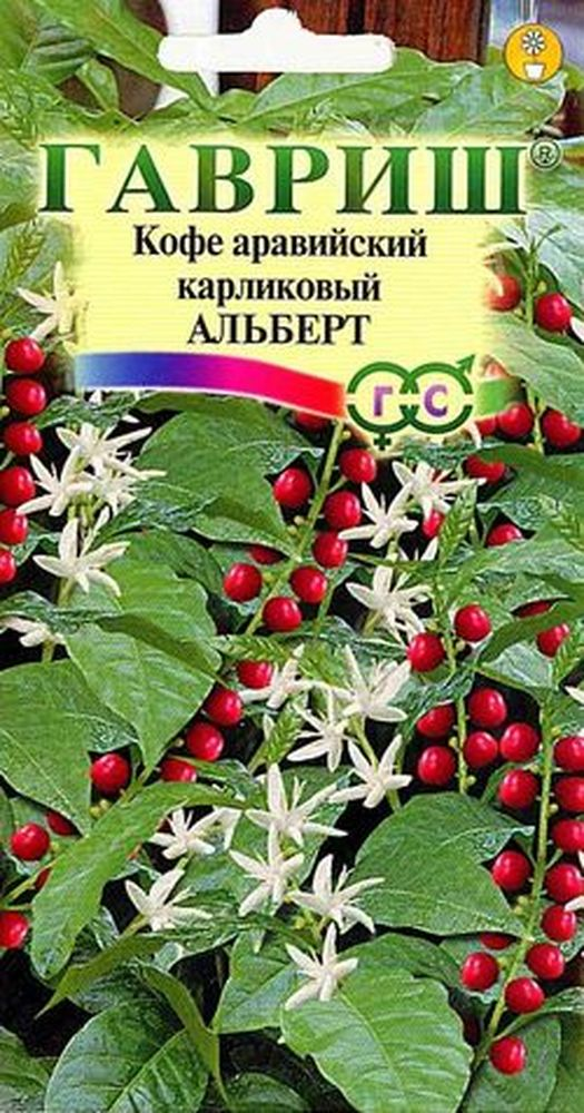 kofe-araviyskiy-albert-gavrish