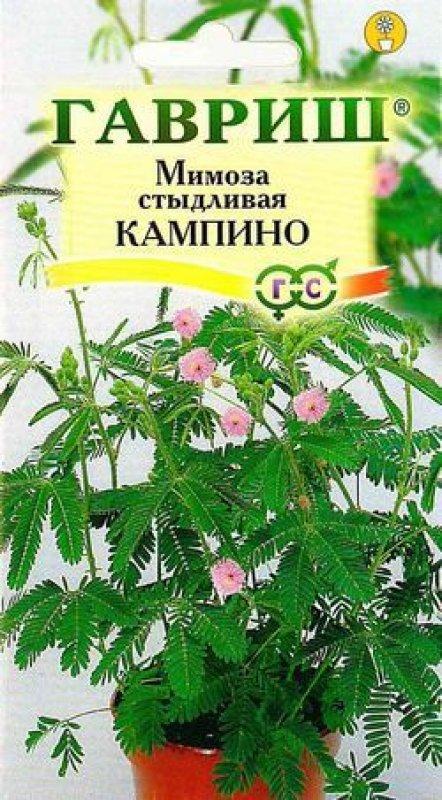 mimoza-stydlivaya-gavrish